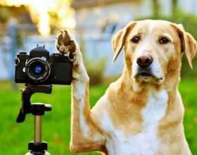 Як знімати собак? фото