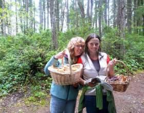 Як збирати гриби? фото
