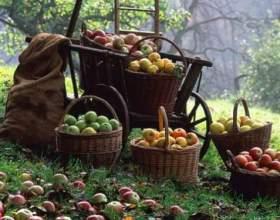 Як збирати яблука? фото