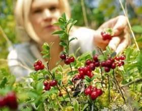 Як збирати ягоди? фото