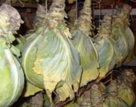 Як зберегти капусту взимку? фото