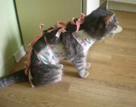 Як стерилізують кішок? фото