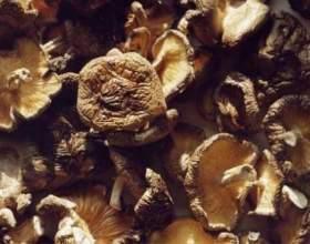 Як сушити гриби в духовці? фото