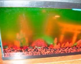 Як доглядати за акваріумом? фото
