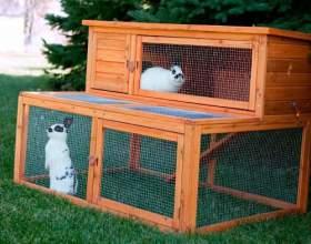 Як доглядати за кроликами? фото