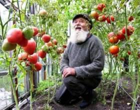 Як доглядати за помідорами? фото