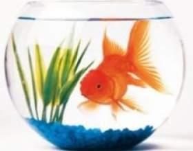 Як доглядати за рибками фото