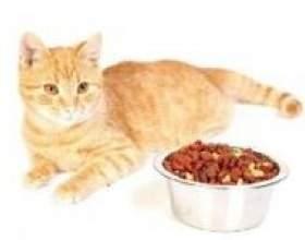 Як вибрати хороший корм для домашньої кішки фото