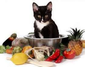 Як вибрати вітаміни для кішок фото
