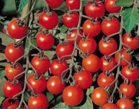 Як вирощувати помідори? фото