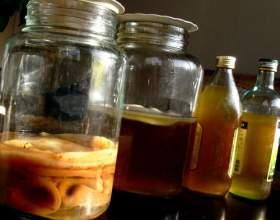 Як виростити чайний гриб з нуля? фото