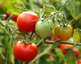 Як виростити хороший урожай помідорів і огірків фото