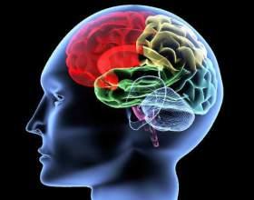 Як змусити мозок працювати? фото