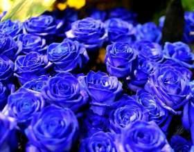 Які бувають троянди? фото