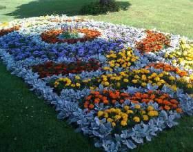 Які квіти посадити на клумбі? фото