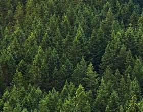 Які є ліси? фото