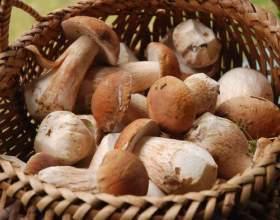 Які гриби можна збирати? фото