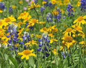 Які рослини розмножуються насінням? фото