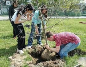 Коли садити дерева? фото