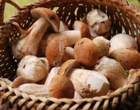 Коли збирати гриби? фото