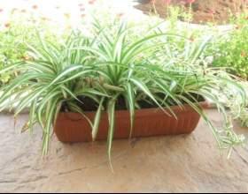 """Кімнатні рослини, які є ідеальними для спальні С""""РѕС'Рѕ"""