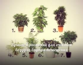 Кімнатні рослини, які очищають повітря фото