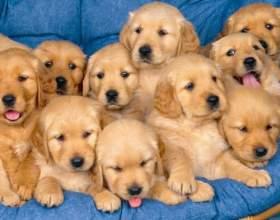 Чи можна завагітніти від собаки? фото