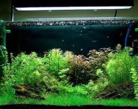 Чи потрібен фільтр в акваріумі? фото