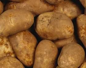 Чому чорніє картопля? фото