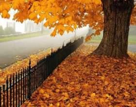 Чому листя жовтіє і опадає? фото