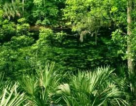 Чому рослину називають рослиною? фото