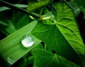 Чому рослини зелені? фото