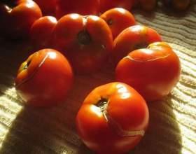 Чому тріскаються помідори? фото