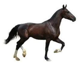 Коні. фото