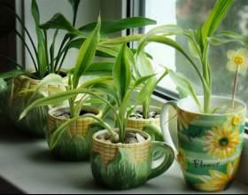 Найкорисніші домашні рослини фото