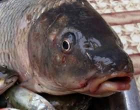 Скільки калорій в рибі? фото