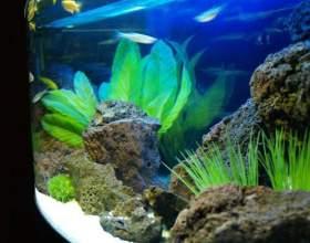 Скільки відстоювати воду для акваріума? фото