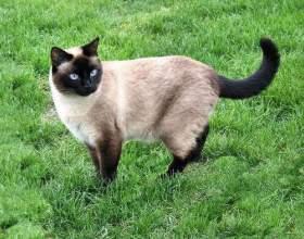 У кішки запор: що робити? фото