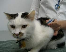 У кота температура, що робити? фото