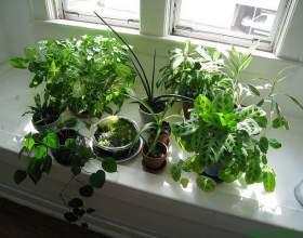 Якою підгодівлі потребують різні кімнатні рослини фото